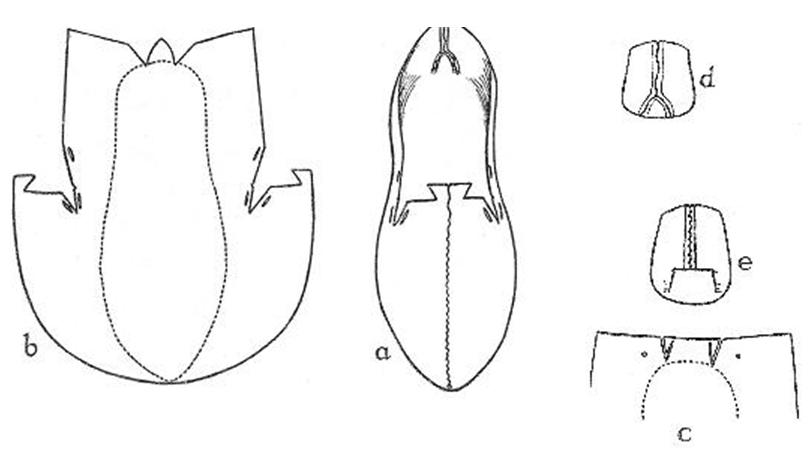 Fig. 6. Shoe: Type 2. National Museum W 11. Ballymacomb, Co. Derry. (Decoration not shown)